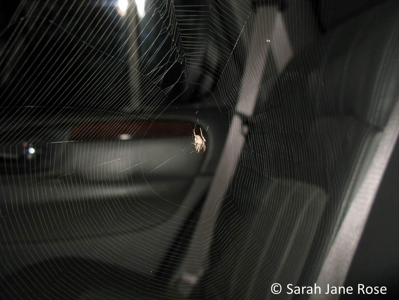 Van spider Sarah Rose